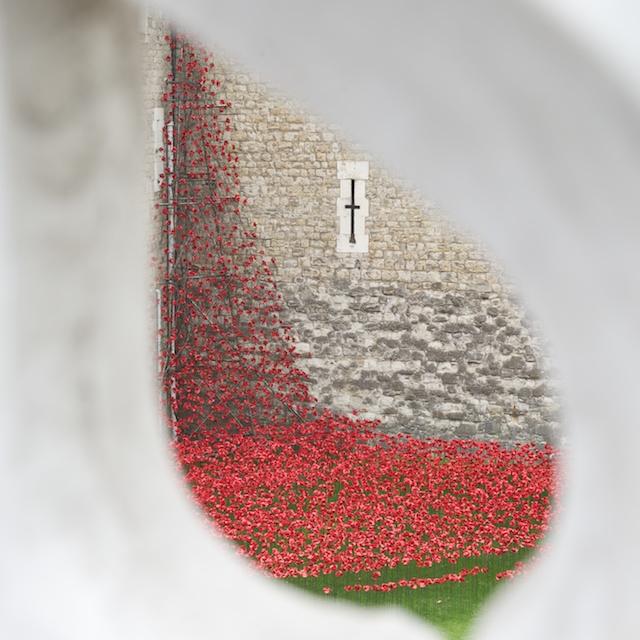 ToL Poppies 3