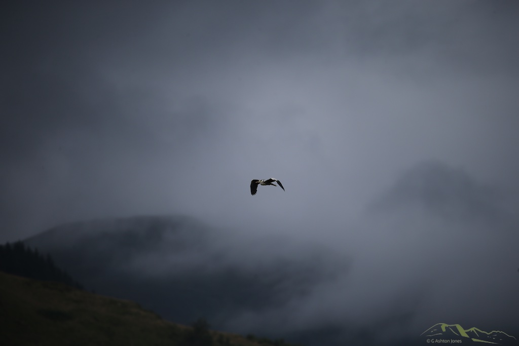 unlike the RAF, Herons fly in bad weather