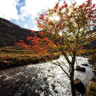 Autumnal Tranquility Amongst Torridon's Natural Splendour