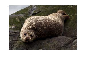 Grey Seals 3